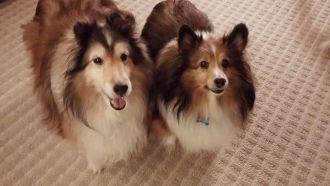 Charles Philson Bates' dogs