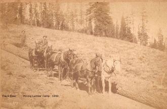California Lumber Camp