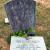 Josiah Cowan York Sr Grave