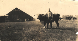 Man and a bull