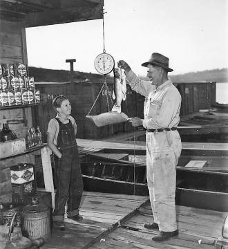 TVA fish census