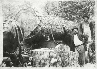 Wm Condley at work, Lumber Mill