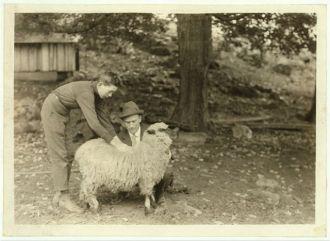Forest Kellison, 4 H Club Member raising a sheep....