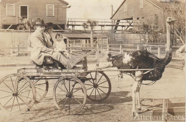 Ostrich Wagon Ride