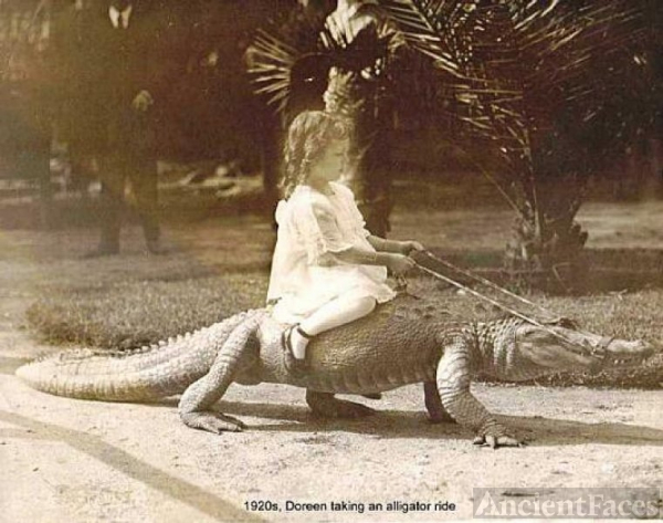 Doreen's Alligator Ride