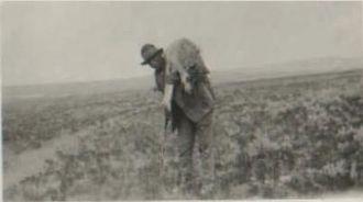 Stephen Eldridge & Gray Wolf