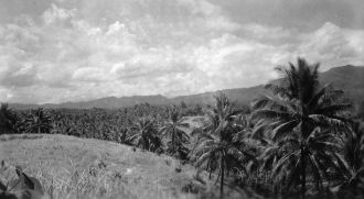 A Coconut Grove, New Guinea