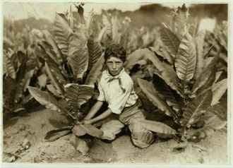 10 yr. old picker on Gildersleeve Tobacco Farm. Location:...