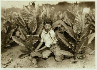 10 yr. old picker on Gildersleeve Tobacco Farm. Location:...