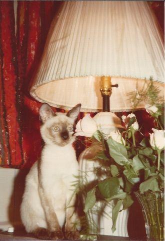 Naomi H (Kulbokas) Thomas's cat