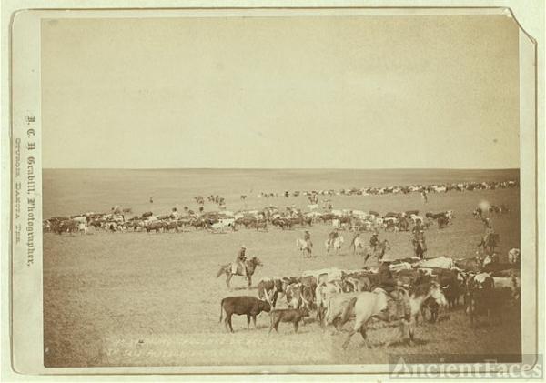 Wild West Prairies
