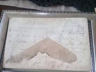 Amalia (Robertson) Fillies Postcard