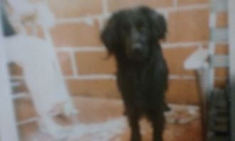 Martin Perez-Santos dog