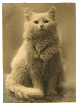 Antique Angora or Persian Cat