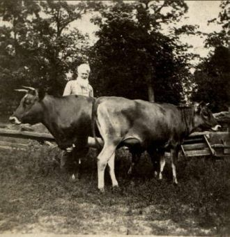Unknown Man with Cows