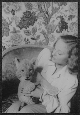 [Portrait of Tallulah Bankhead, holding lion cub Winston...
