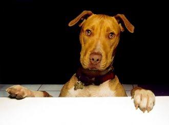 Victor Englebert's dog
