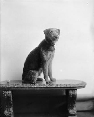Laddie Boy Warren G. Harding's Dog