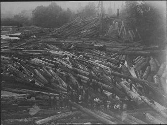 Logging Picture #1