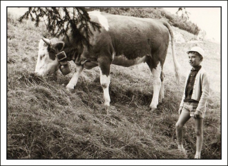 Young Boy with Cow