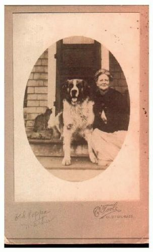 Mystery lady and pets