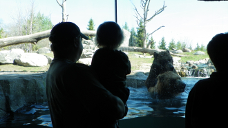 Bear At The Zoo