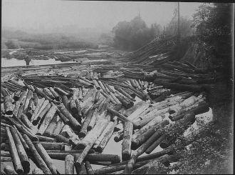 Logging Pic #2