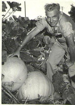 Woody and his pumpkins