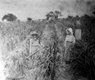 Carroll family, Florida