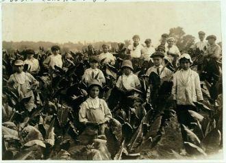 Field-workers, Goodrich Tobacco Farm, near Gildersleeve,...