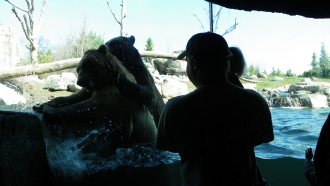 2 Bears At The Zoo