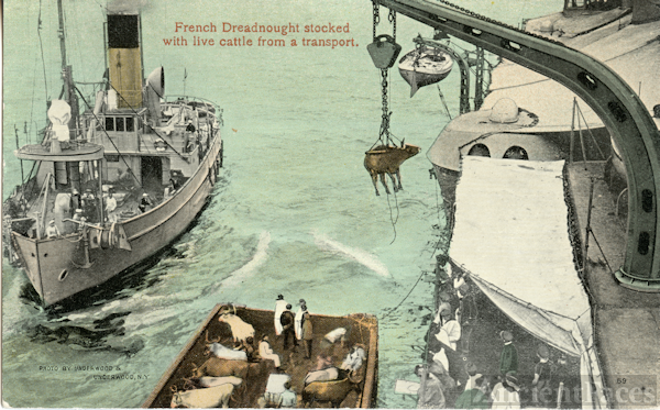 French dreadnought stocked with live cattle