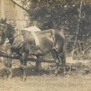 Oran Ford Carpenter