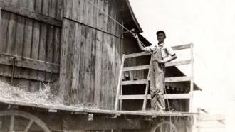 Norman on the farm