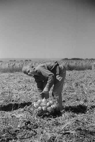 Child labor, Colorado
