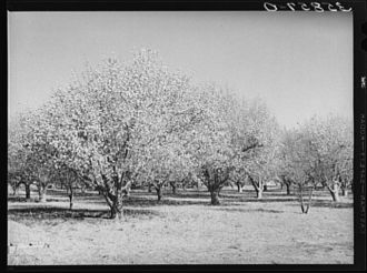 Dust Bowl legacy, New Mexico 1940