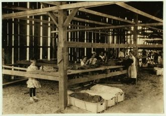 Interior of tobacco shed, Hawthorn Farm. Girls in...