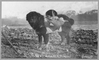 Prince, an Alaskan dog, carrying utensils on his back