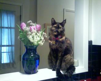 Diane's cat, Tootie