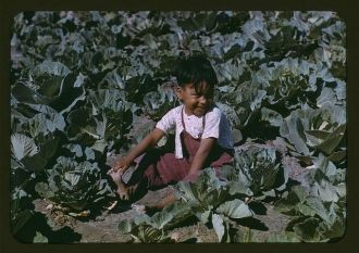 Migratory worker child, 1942