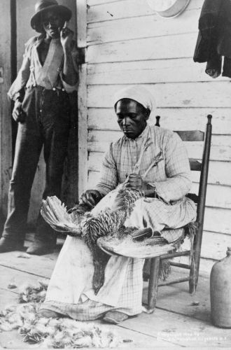 Thanksgiving Turkey, 1900