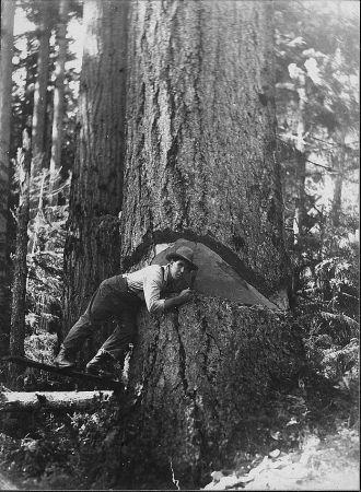 Logging Picture #4